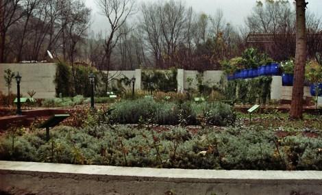 Jardín de plantas medicinales en la consulta del médico bereber